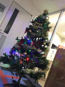 事務所のツリー